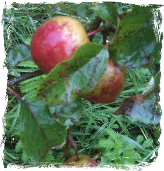 Wild about apples image